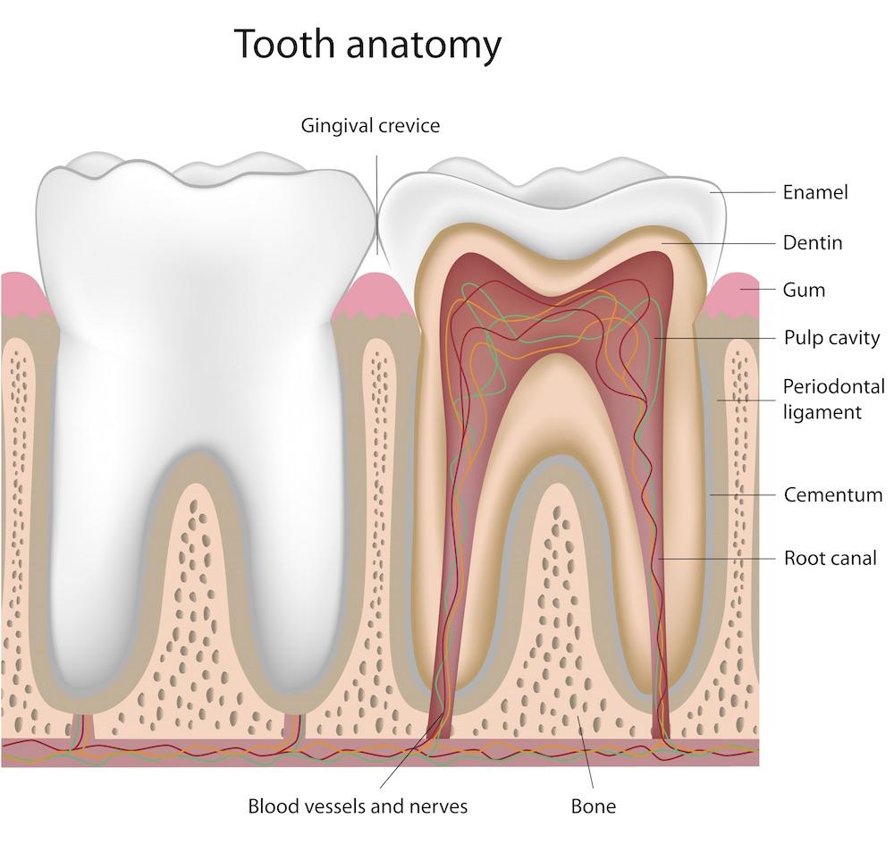 Болит ткань вокруг зуба thumbnail
